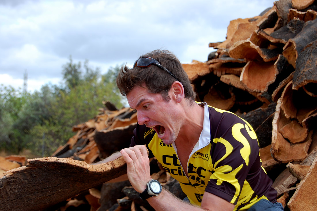 Cyclist about to bite off some cork bark from a fresh stripped panel
