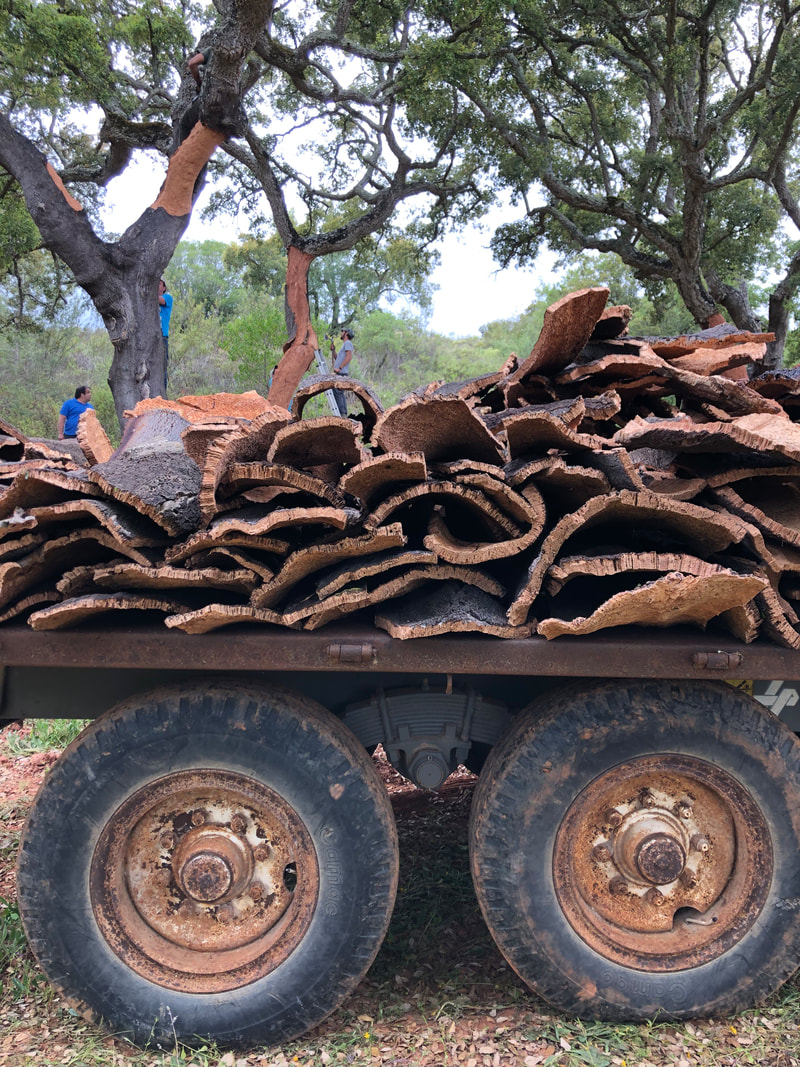 Cork bark being stripped and loaded on a truck in the Alentejo in Portugal